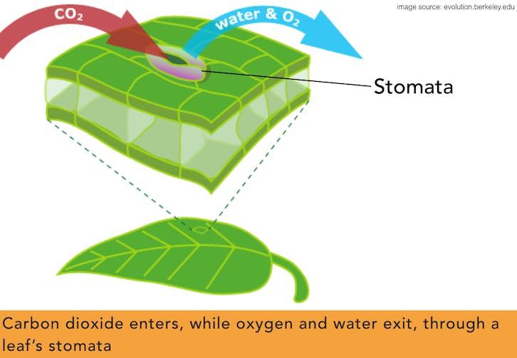 Nutrition In Plants Chalees Min School